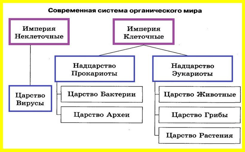 система органического мира