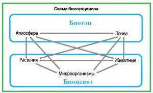 Экосистема (биогеоценоз),